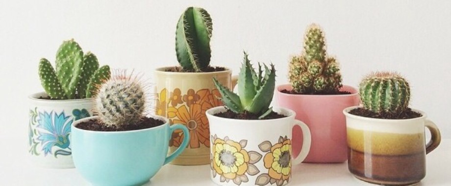 Stunning DIY Succulents For Indoor Decorations Featured