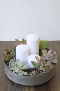 Stunning Diy Succulents For Indoor Decorations 1