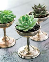Stunning Diy Succulents For Indoor Decorations 22