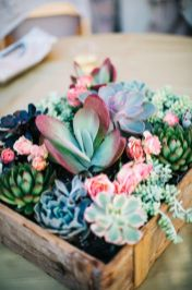 Stunning Diy Succulents For Indoor Decorations 23
