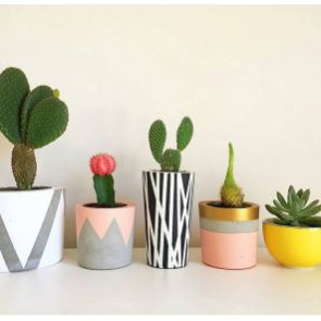 Stunning Diy Succulents For Indoor Decorations 3