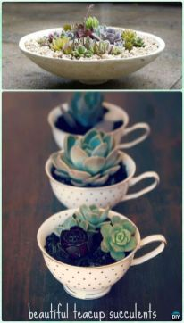 Stunning Diy Succulents For Indoor Decorations 30