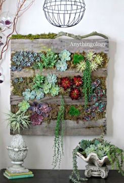 Stunning Diy Succulents For Indoor Decorations 31