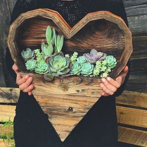 Stunning Diy Succulents For Indoor Decorations 4