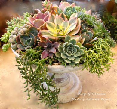 Stunning Diy Succulents For Indoor Decorations 44