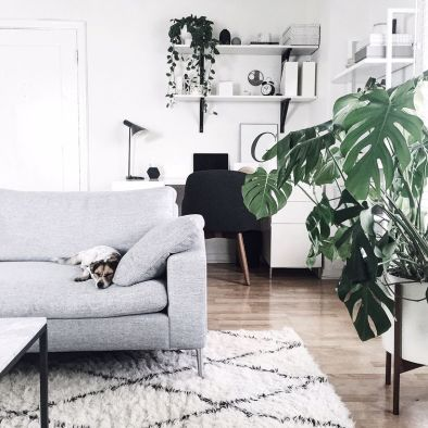 Best Indoor Plants Decor For Air Purify Apartment And Home 16