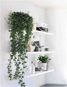 Best Indoor Plants Decor For Air Purify Apartment And Home 22