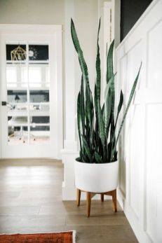 Best Indoor Plants Decor For Air Purify Apartment And Home 35
