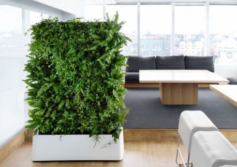 Best Indoor Plants Decor For Air Purify Apartment And Home 36