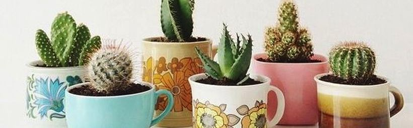 Cute Cactus Decor Ideas For Your Home Featured