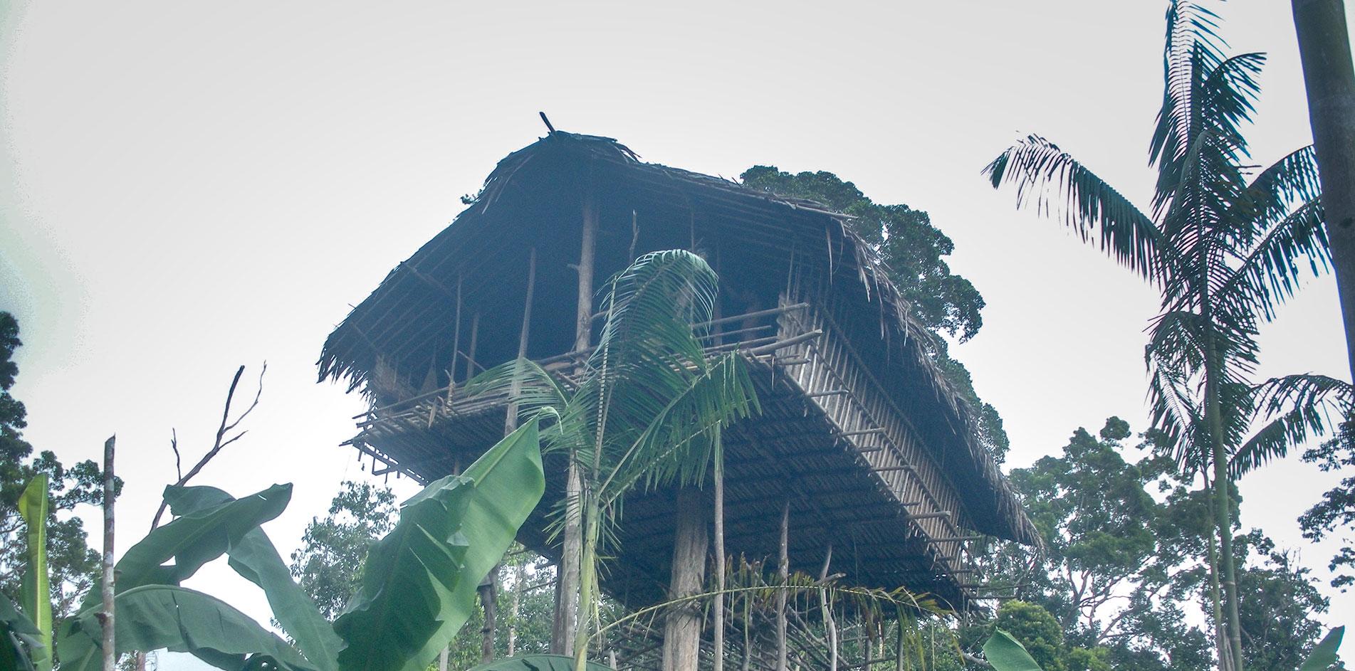 Korowai Papua Travel Guide