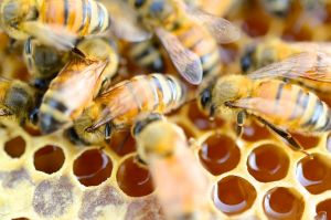 Why Raw Honey Is The New Superfood