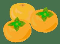 柿のイラスト(PNG)