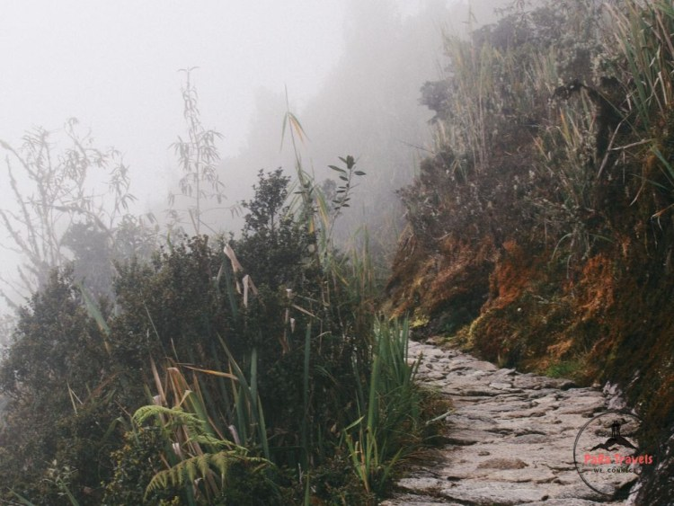 Jungle trail paths
