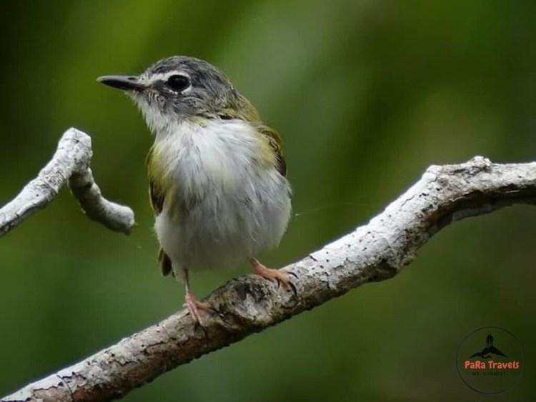 Tambopata bird