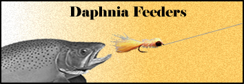 Daphnia blooms can lead to large concentrations of feeding fish.