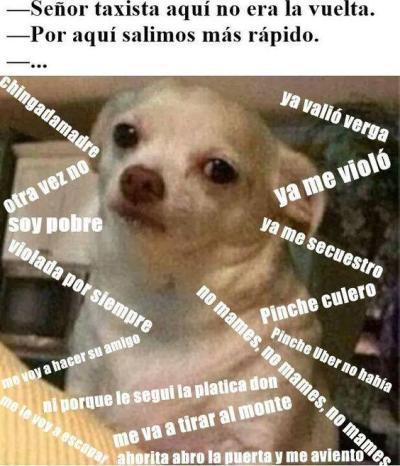 meme de chihuahuas 1