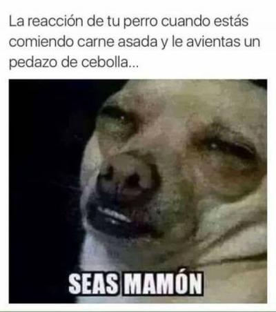 meme de chihuahuas 16