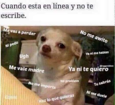 meme de chihuahuas 2