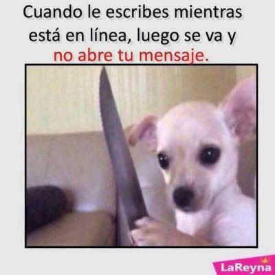 meme de chihuahuas 21