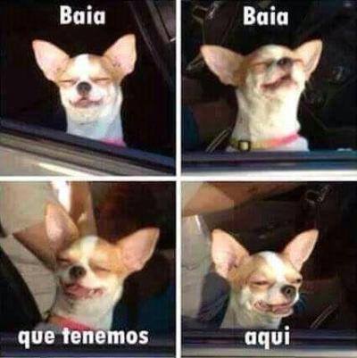 meme de chihuahuas 26