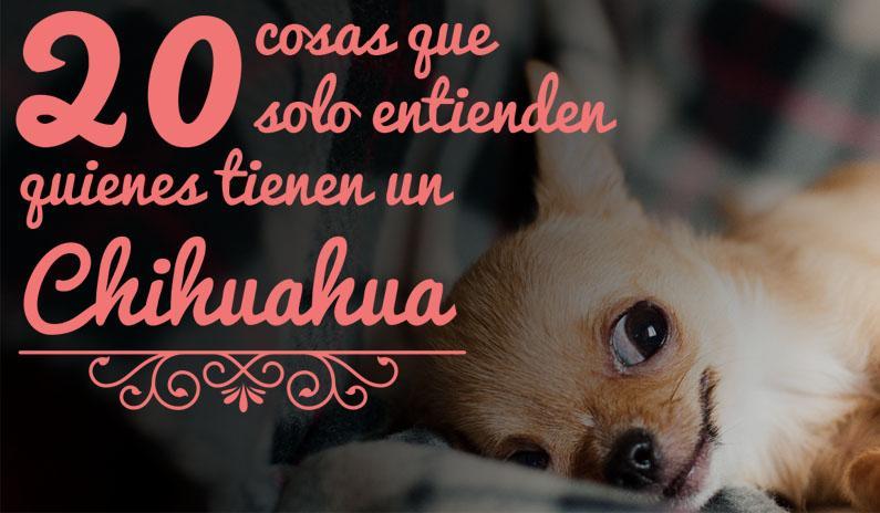 20 cosas que solo entienden quienes tienen un Chihuahua