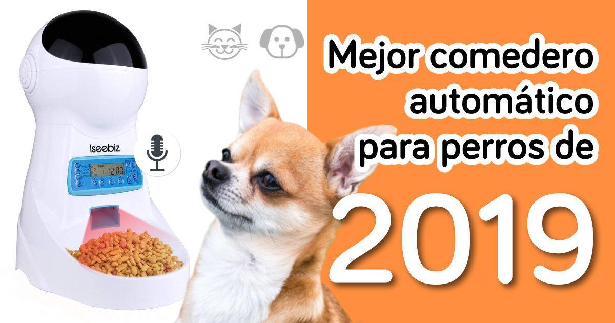 Lo Mejor Para Viajes De Vacaciones Blanco Dispensador Inteligente De 4 Comidas Comedero Autom/ático De Gran Capacidad Para Perro Y Gato