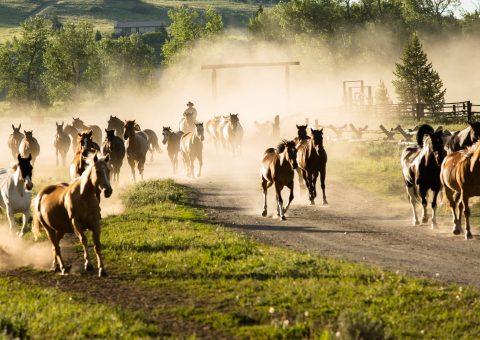 PRR_Horses_Wranglers_PAM_6553