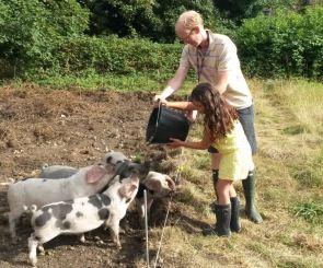 Paradise Cooperative Pigs5