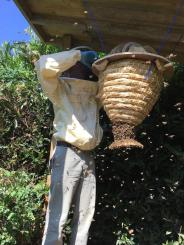 Paradise Cooperative Managing the Beehive