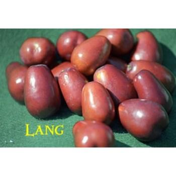 Lang Jujube