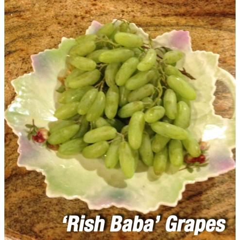 Persian grape Rish Baba