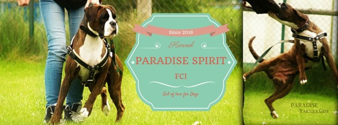 Paradise Spirit Kennel