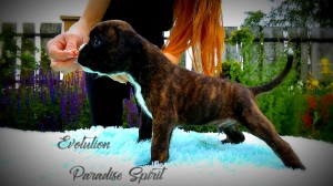 EVOLUTION Paradise Spirit - AVAILABLE