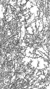 伊藤若冲 Ito Jakuchu 塗り絵 coloring 動植綵絵 18_桃花小禽図-001-rinkaku06