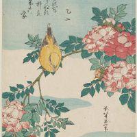 黄鳥 長春(こうちょう ばら)