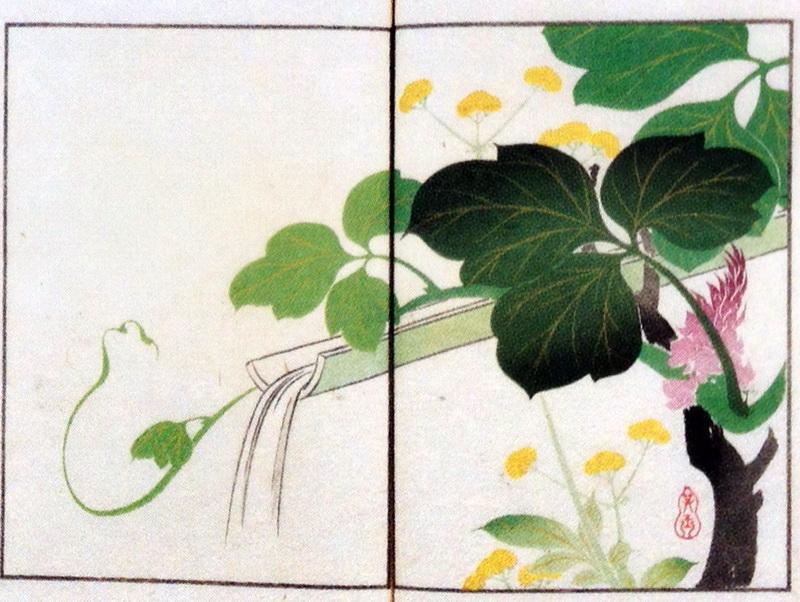中野其玉 Nakano Kigyoku 其玉画譜 15 葛に女郎花(ヤブコウジ) Book of pictures 15 Pueraria lobata and Patrinia scabiosifolia