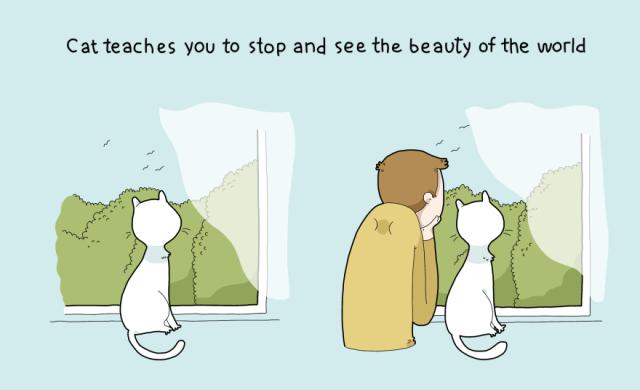 Bir Kediye Sahip Olmanın 10 Avantajı / 10 advantages of having a cat