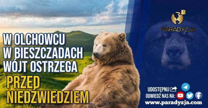 W Olchowcu w Bieszczadach wójt ostrzega przed niedźwiedziem