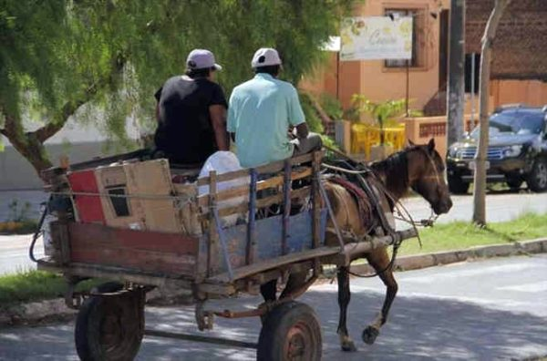 CMJP aprova projeto de Bruno que flexibiliza circulação de carroças em JP