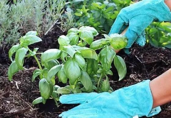como-plantar-em-casa