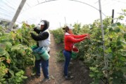 El agro de Jalisco, puntero nacional en empleo formal