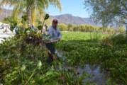 Cumple Lago de Chapala 10 años como Sitio Ramsar