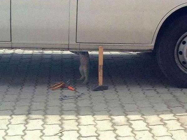 11.) Donde se metió ese ratón...