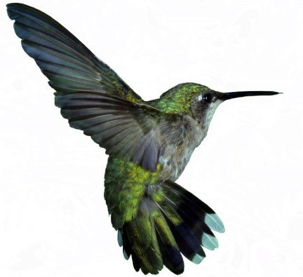 seo-google-hummingbird-update
