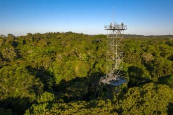4 torres de observação incríveis ao redor do mundo para ver e ouvir a natureza do alto