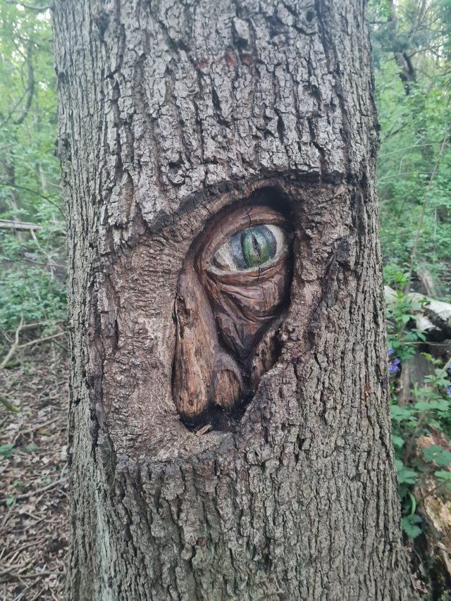 Many Faces of Park Wood | Doncaster