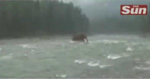 Un vrai Mammouth en Sibérie?