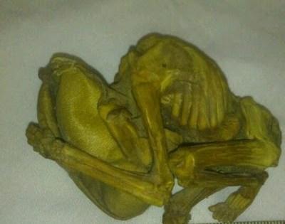 Une étrange créature aurait été découverte en Iran.