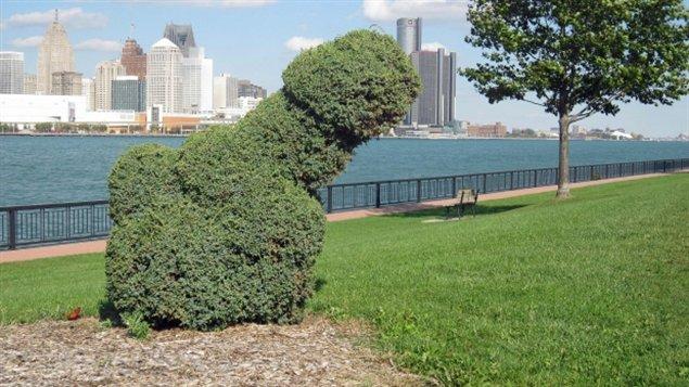 Un buisson qui fait jaser à Windsor